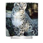 Snow Leopard Uncia Uncia Portrait Shower Curtain by Gerry Ellis