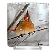 Snow Surprise Shower Curtain by Lois Bryan