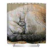 Snugglepuss Shower Curtain by Kristin Elmquist