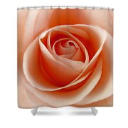 Soft Rose Shower Curtain by Steve Williams