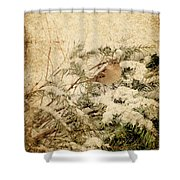 Sparrow In Winter I - Textured Shower Curtain by Angie Tirado