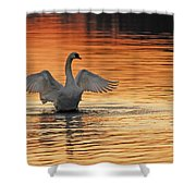 Spreading Her Wings In Gold Shower Curtain by Randall Branham