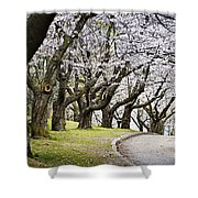 Spring Apple Orchard Shower Curtain by Elena Elisseeva
