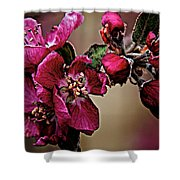 Spring Shower Curtain by Charles Muhle