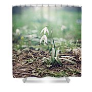 Spring Rising Shower Curtain by Heather Applegate