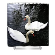 Stanley Park Swans Shower Curtain by Will Borden