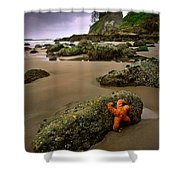 Starfish On The Rocks Shower Curtain by Inge Johnsson