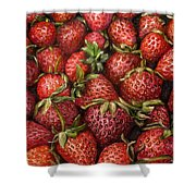 Strawberries -2 Contemporary Oil Painting Shower Curtain by Natalja Picugina