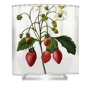 Strawberry Shower Curtain by Granger
