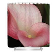 Subtle Calla Lily Shower Curtain by Carol Groenen