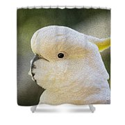 Sulphur Crested Cockatoo Shower Curtain by Sheila Smart