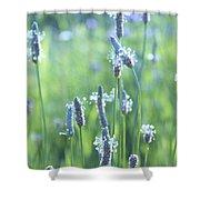 Summer Charm Shower Curtain by Aimelle