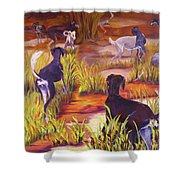 Summer Fun Shower Curtain by Terry  Chacon
