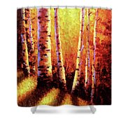 Sunlight Through The Aspens Shower Curtain by David G Paul