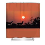 Sunset Silhouette Shower Curtain by David Dehner