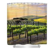 Sunset Vineyard Shower Curtain by Sharon Foster
