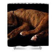 Sweet Dreams Puppy Shower Curtain by Angie Tirado-McKenzie