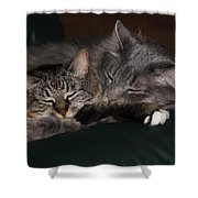 Sweet Dreams Shower Curtain by Shane Bechler