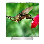 Sweet Satisfaction Shower Curtain by Christina Rollo