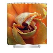 Sweet Seduction Shower Curtain by Karen Wiles