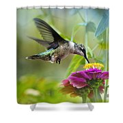 Sweet Success Shower Curtain by Christina Rollo