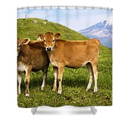Taranaki, Dairy Cows Shower Curtain by Himani - Printscapes