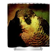 The Falcon Shower Curtain by Wingsdomain Art and Photography