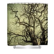 The Haunted Tree Shower Curtain by Lisa Russo