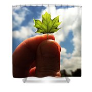 The Mighty Maple Shower Curtain by Michelle Calkins