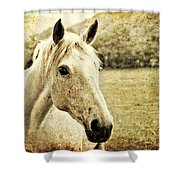 The Old Grey Mare Shower Curtain by Meirion Matthias