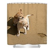 The Puppies Shower Curtain by Madeline Ellis
