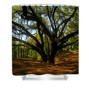 The Sacred Oak Shower Curtain by David Lee Thompson