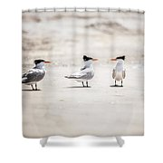 The Talking Terns Shower Curtain by Lisa Russo