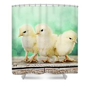 Three Amigos Shower Curtain by Amy Tyler