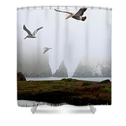 Three Pelicans in Portrait Shower Curtain by Wingsdomain Art and Photography