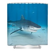 Tiger Shot Shower Curtain by Dave Fleetham - Printscapes