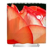 Touch Of Rose Shower Curtain by Karen Wiles