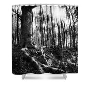 Trees At The Entrance To The Valley Of No Return Shower Curtain by Simon Marsden