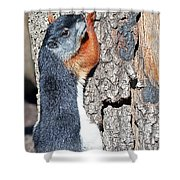 Tricolored Squirrel Shower Curtain by Kenneth Albin