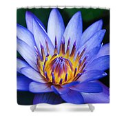 Tropical Dreams Shower Curtain by Sharon Mau