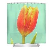 Tulip Shower Curtain by Wim Lanclus