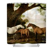 Two Mares And A Foal Shower Curtain by George Stubbs