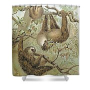 Two-toed Sloth Shower Curtain by Granger