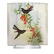 Urochroa Bougieri Shower Curtain by John Gould