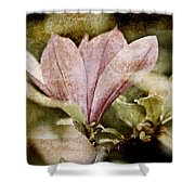 Vintage Magnolia Shower Curtain by Frank Tschakert