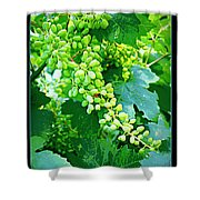 Vintage Vines  Shower Curtain by Carol Groenen