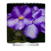 Violet Dreams Shower Curtain by William Jobes