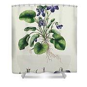 Violets Shower Curtain by English School