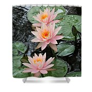 Water Lily Trio Shower Curtain by Sabrina L Ryan