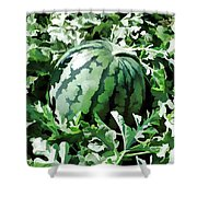 Waterelons In A Vegetable Garden Shower Curtain by Lanjee Chee